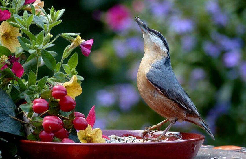 Wie bekomme ich Vögel in den Garten