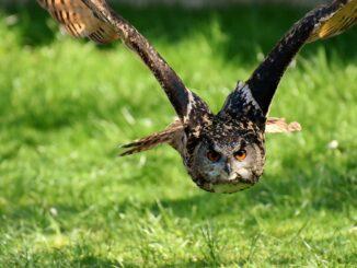 Beschreibung und Klassifizierung von Wildvögeln