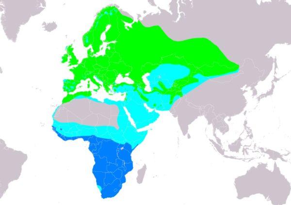 Grauschnäpper Lebensraum und Verbreitung