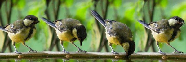 Warum wird die Vogeltränke nicht angenommen